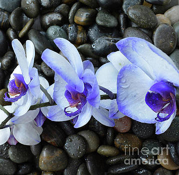 Lavender Orchids on the Rocks by To-Tam Gerwe