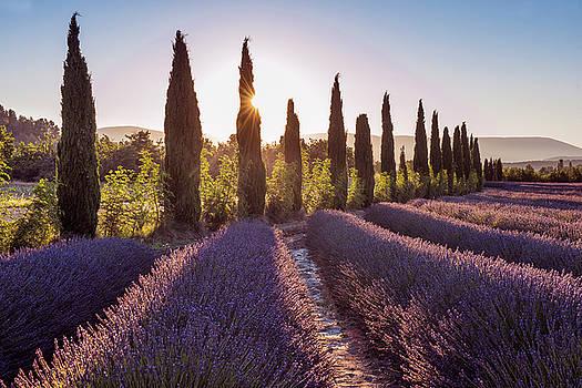Lavender Sunrise by Christian Heeb