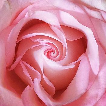 Pink by Colleen Williams