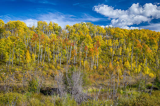 James BO  Insogna - Layers of Colors of an Aspen Tree Forest