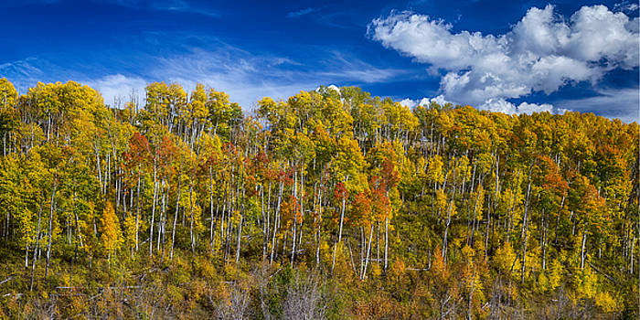 James BO  Insogna - Layers of Colors of an Aspen Tree Forest Panorama