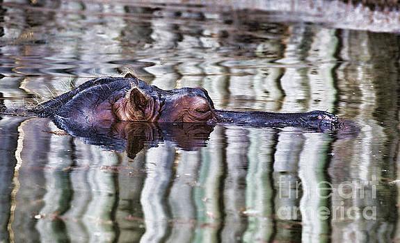 Lazy Floater by Douglas Barnard
