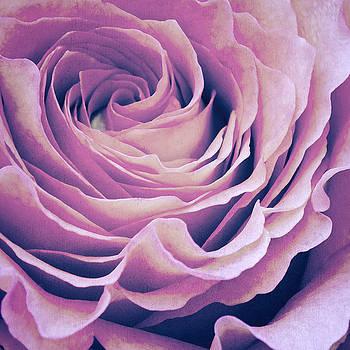 Angela Doelling AD DESIGN Photo and PhotoArt - Le petale de rose pourpre