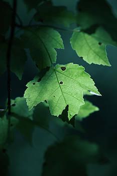 Leaf at Dusk by Walt Stoneburner