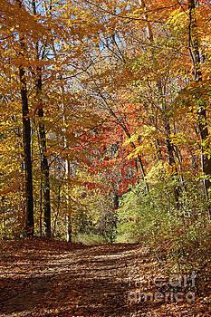 Leaf covered path by Kathy DesJardins