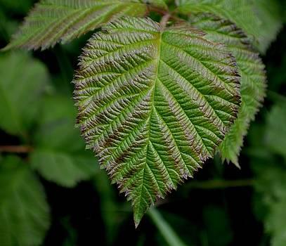 Leaf by Ekta Gupta
