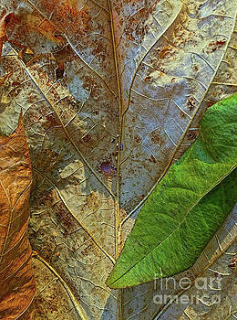 Leaf Forest by Todd Breitling