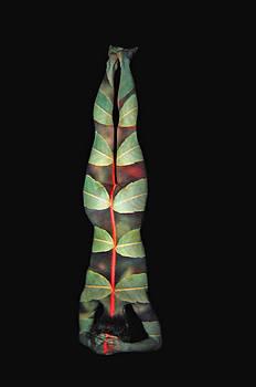Leaf Frond by Arla Patch Jess McKneally