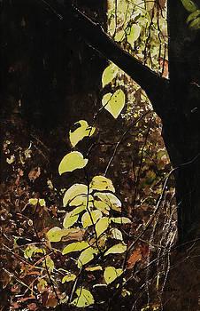 Leaf glow by Carla Dabney
