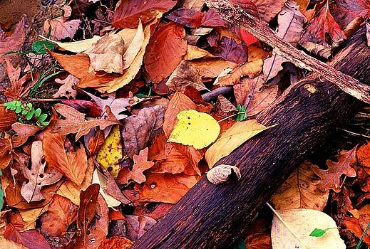 Leaf Illumination  by Rodney Williams