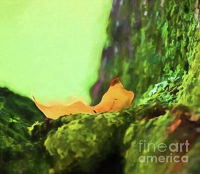 Leaf in the Cradle by Kerri Farley