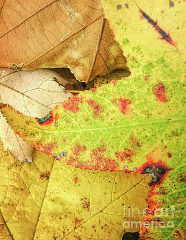 Leaf Lines and Colors by Todd Breitling
