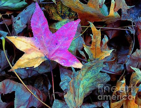 Leaf Pile Portrait by Todd Breitling