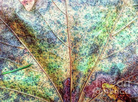 Leaf Terrain by Todd Breitling