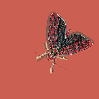 Leafhopper by Jude Labuszewski