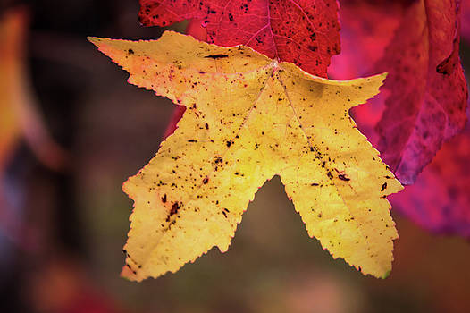 Leafy by Jeremy Sage