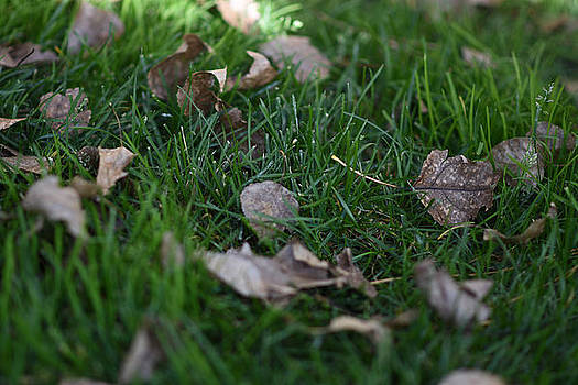 Leaves and Grass Textures  by Sharon Wunder Photography