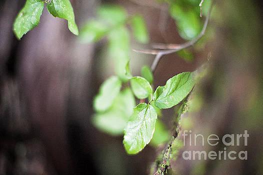 Leaves by Angelina Cornidez