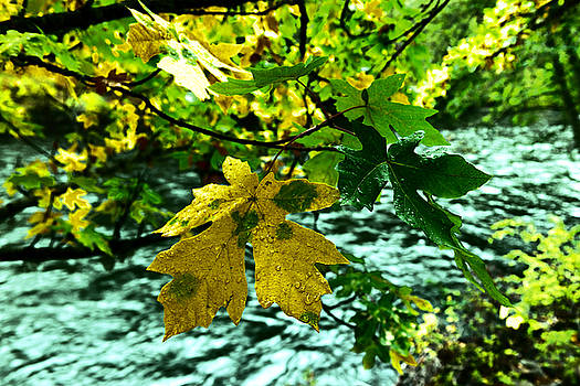 Leaves before the river by Jeff Swan