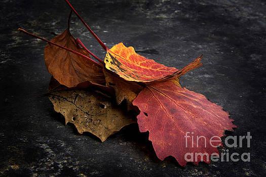 BERNARD JAUBERT - Leaves