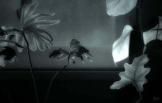 Leaves By Moonlight by Jeff Breiman