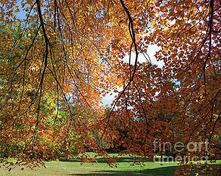 Leaves Everywhere by Cheryl Del Toro