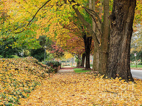 Leaves Galore by Ava Reaves