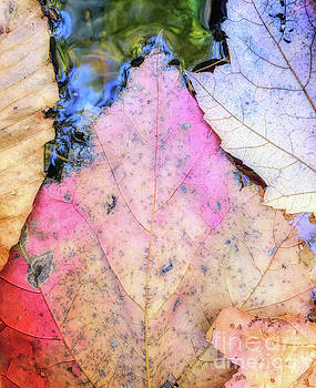 Leaves in a Stream by Todd Breitling