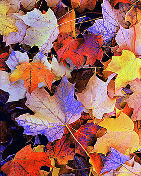 Leaves in Color by Paul Wilford