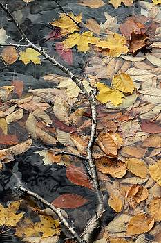 Leaves in Limbo by Doris Potter