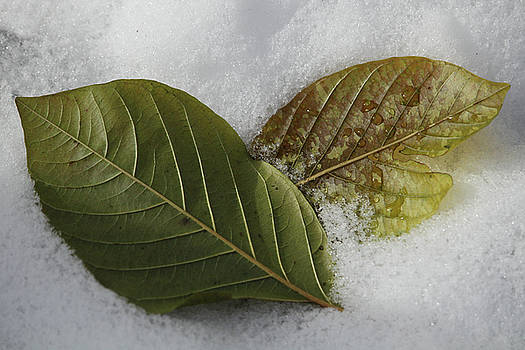 Leaves In The Snow by Doris Potter