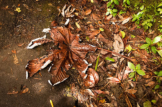 Leaves by Leesa Toliver