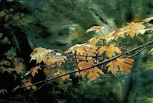 Leaves by Leonard Heid