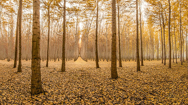 Leaves Letting Go by Lori Grimmett