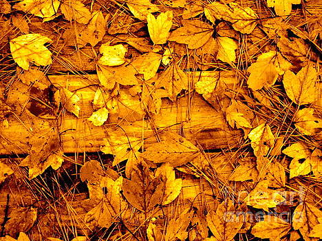Leaves of Sepia by Cathy Dee Janes