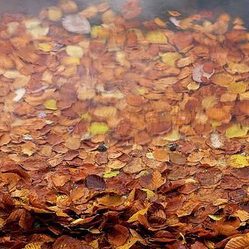 BERNARD JAUBERT - Leaves on a lake