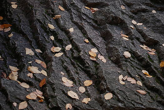 Leaves on A Rock by Dave Fischer