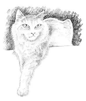 Ledge Cat by William Krupinski