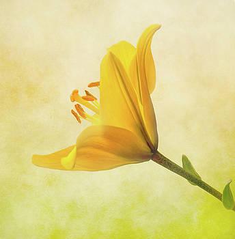 Lemon Lily by Roy McPeak