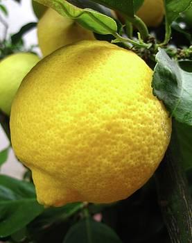 Lemon by MaryEllen Frazee