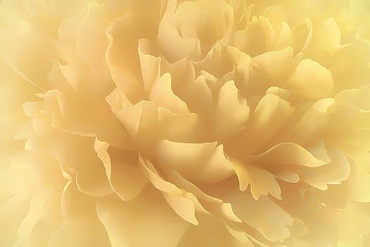 Lemon Splash by Darlene Kwiatkowski