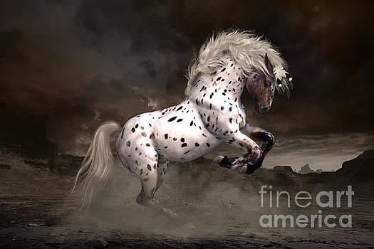 Leopard Appaloosa Shiloh by Shanina Conway