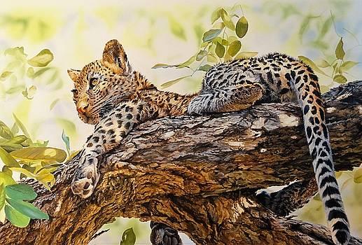 Leopard cub by Julian Wheat