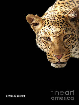 Leopard Face by Sharon K Shubert