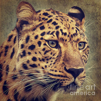 Leopard Portrait by Angela Doelling AD DESIGN Photo and PhotoArt