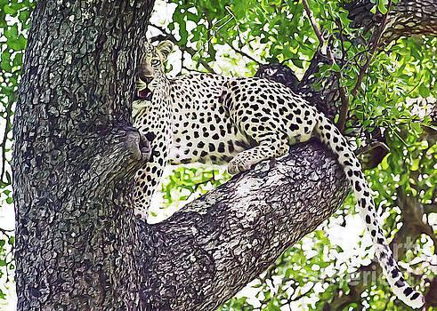 Leopard by Sergey Korotkov