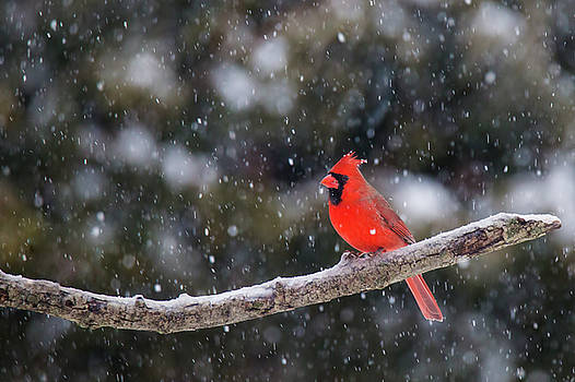 Let it Snow by Mircea Costina Photography