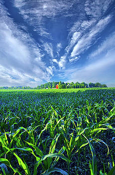 Let Me Never Lose Sight by Phil Koch