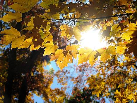 Let The Sun Shine In by Angela Davies