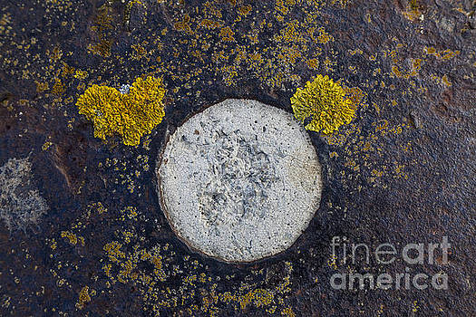 Lichen and circle. by John Cox